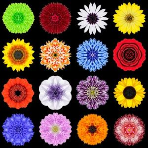 Big Collection of Various Colorful Pattern Flowers by tr3gi