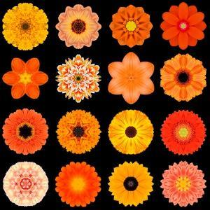 Big Collection of Various Orange Pattern Flowers by tr3gi