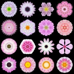Big Collection of Various Pink Pattern Flowers by tr3gi