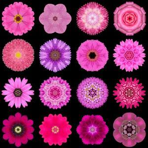 Big Collection of Various Purple Pattern Flowers by tr3gi