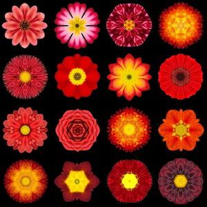 Big Collection of Various Red Pattern Flowers by tr3gi