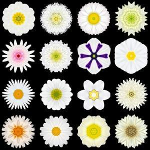 Big Collection of Various White Pattern Flowers by tr3gi
