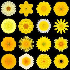 Big Collection of Various Yellow Pattern Flowers by tr3gi