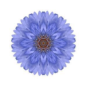Blue Chrysanthemum Mandala Flower Kaleidoscope by tr3gi