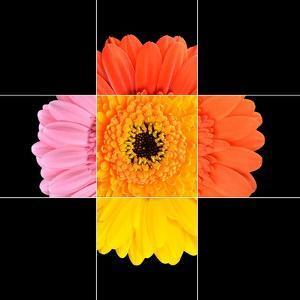 Colorful Gerbera Marigold Flower Mosaic Design by tr3gi