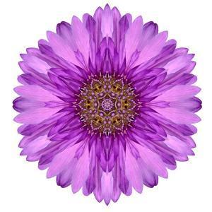 Kaleidoscopic Chrystanthemum Flower Mandala by tr3gi