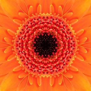 Orange Concentric Flower Center: Mandala Kaleidoscopic Design by tr3gi