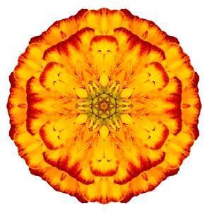 Orange Concentric Marigold Mandala Flower by tr3gi