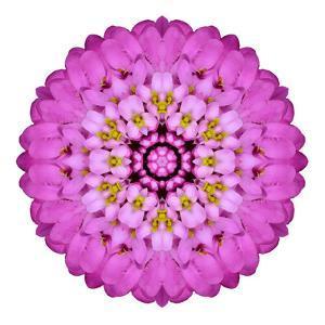 Pink Kaleidoscopic Flower Mandala by tr3gi