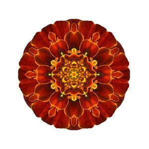 Red Concentric Marigold Mandala Flower by tr3gi