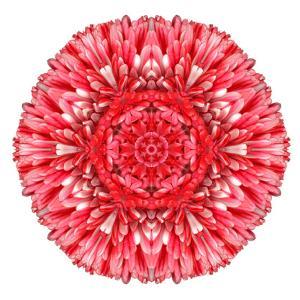 Red Daisy Mandala Flower Kaleidoscopic by tr3gi