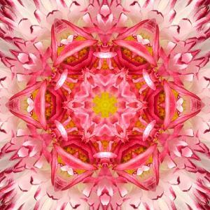 Red Mandala Concentric Flower Center Kaleidoscope by tr3gi
