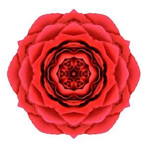 Red Rose Mandala Flower Kaleidoscopic by tr3gi