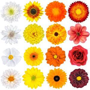 Various White, Yellow, Orange And Red Flowers Isolated On White by tr3gi