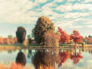Fall Ottawa 2 by Tracey Telik