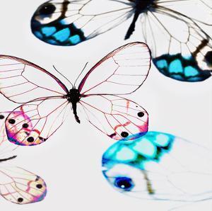 Glasswings by Tracey Telik