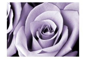 Lavender Rose by Tracey Telik