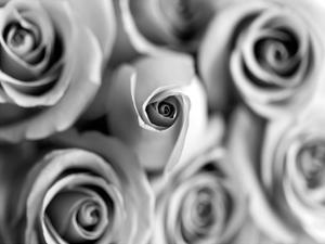 Monotone Bouquet by Tracey Telik