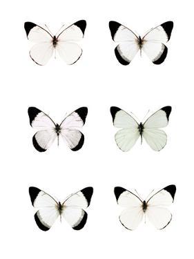 Pale Butterflies 6 by Tracey Telik
