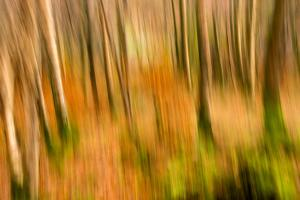 Abstract Shot of Autumnal Woodland in Grasmere, Lake District Cumbria England Uk by Tracey Whitefoot