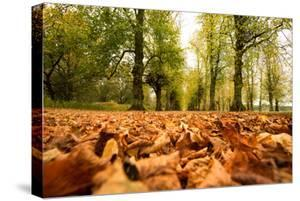 Autumn on Lime Tree Avenue, Clumber Nottinghamshire England Uk by Tracey Whitefoot