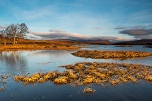 Early Morning Light at Rannoch Moor, Scotland UK by Tracey Whitefoot