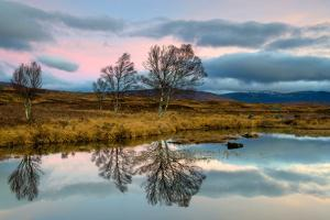 Early Morning Tree Reflections at Loch Ba, Rannoch Moor Scotland UK by Tracey Whitefoot