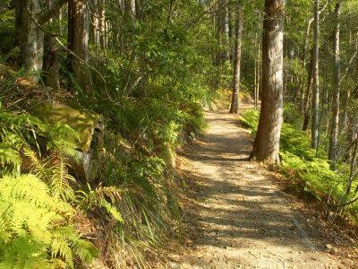 https://imgc.allpostersimages.com/img/posters/track-to-kondalilla-falls-kondalilla-national-park-sunshine-coast-queensland-australia_u-L-P2T5MQ0.jpg?artPerspective=n