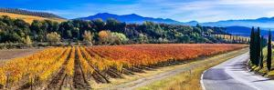 Traditional Countryside and Landscapes of Beautiful Tuscany. Vineyards in Golden Colors and Cypress