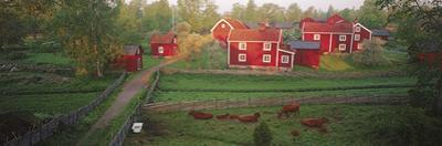 Traditional Red Farm Houses and Barns at Village, Stensjoby, Smaland, Sweden