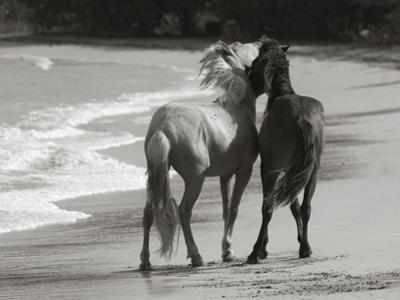 Young Mustangs on Beach by Traer Scott