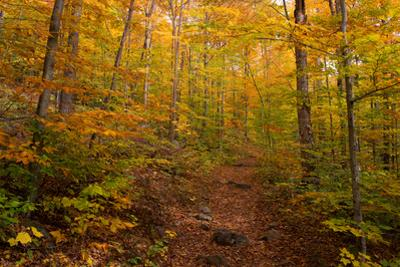Trail in a forest, Goodnow Mountain, Adirondack Mountains State Park, New York State, USA
