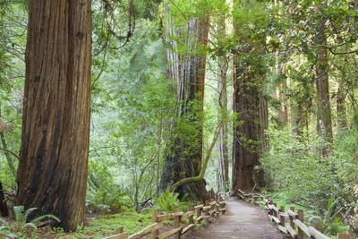 https://imgc.allpostersimages.com/img/posters/trail-through-muir-woods-national-monument-california-usa_u-L-PXR6IA0.jpg?artPerspective=n