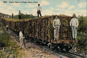 Train Load of Sugar Cane Leaving the Field, Cuba, 1915
