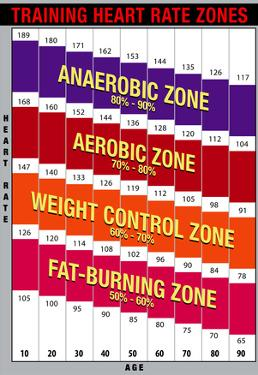 Training Heart Rate Zones Chart (Bright)