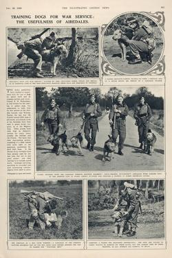 Training of Dogs for War Service: the Usefulness of Airedales