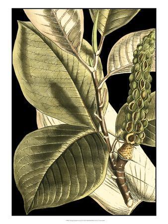 https://imgc.allpostersimages.com/img/posters/tranquil-tropical-leaves-ii_u-L-PH6KAB0.jpg?p=0