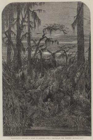 https://imgc.allpostersimages.com/img/posters/transatlantic-sketches-a-swamp-in-louisiana_u-L-PVWFNS0.jpg?p=0