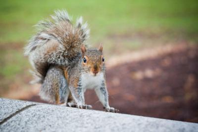 Traveling Squirrel Photo