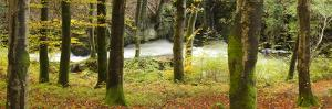 River Flowing through Forest by Travelpix Ltd