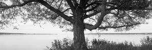 Tree at the Lakeside, Wisconsin, USA
