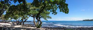 Tree Heliotrope on Beach, Kukio Bay, Kailua Kona, Hawaii, USA