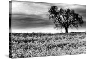 Tree in a Field, Severville, Tennessee