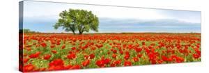 Tree in a poppy field