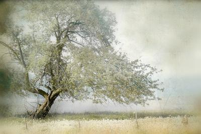 https://imgc.allpostersimages.com/img/posters/tree-in-field-of-flowers_u-L-Q1GA36R0.jpg?p=0