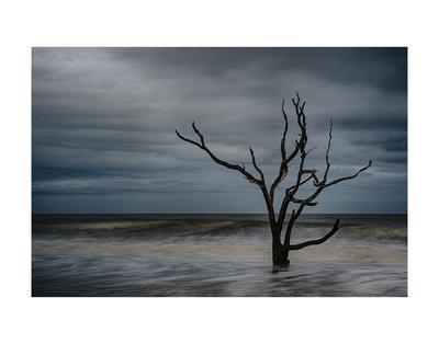 https://imgc.allpostersimages.com/img/posters/tree-on-botany-bay_u-L-F8SEH70.jpg?p=0