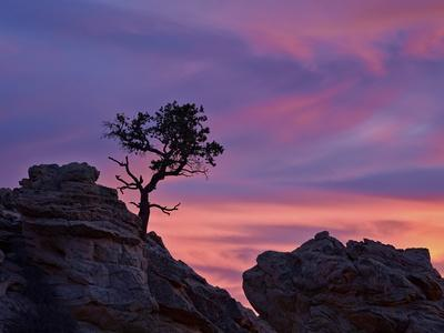 https://imgc.allpostersimages.com/img/posters/tree-on-sandstone-silhouetted-at-sunset-with-purple-clouds_u-L-PWFBAW0.jpg?p=0
