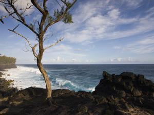 Tree on the Beach, Le Souffleur D'Arbonne, Le Baril, Reunion Island