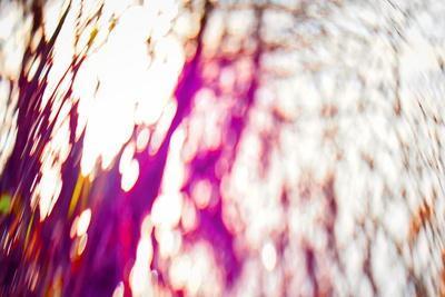 https://imgc.allpostersimages.com/img/posters/tree-palette-2017_u-L-Q1GTWTR0.jpg?artPerspective=n