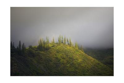 https://imgc.allpostersimages.com/img/posters/trees-above-molokai_u-L-Q1CA76V0.jpg?artPerspective=n